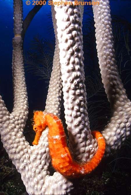 crustaceans, nudibranchs, seahorses, octopus, lobster ...