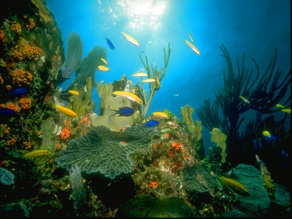 underwater cartoon wallpaper - photo #10